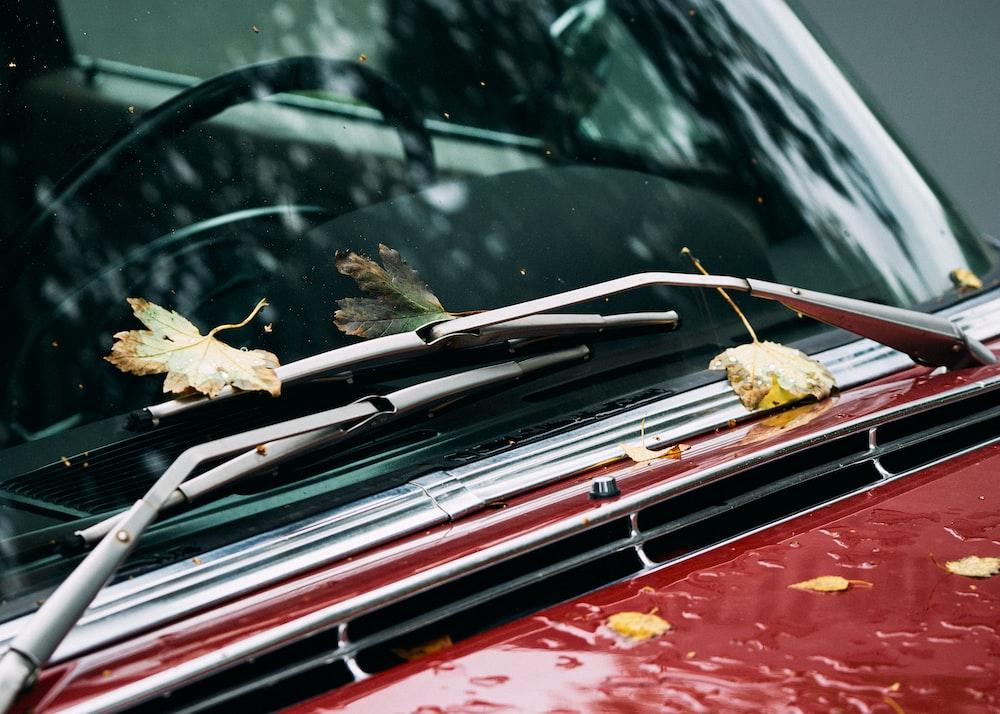 leaves on vehicle