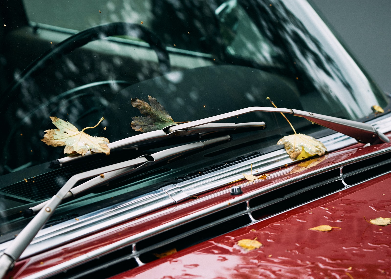 """Sony a6000 sample photo. """"Leaves on vehicle"""" photography"""