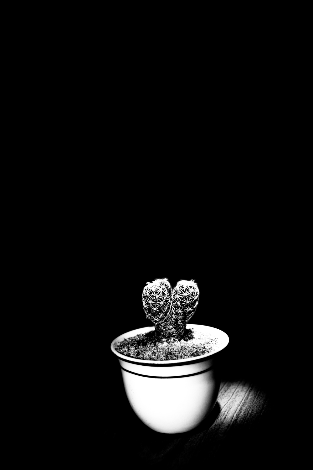 potted cactus plant grayscale photography