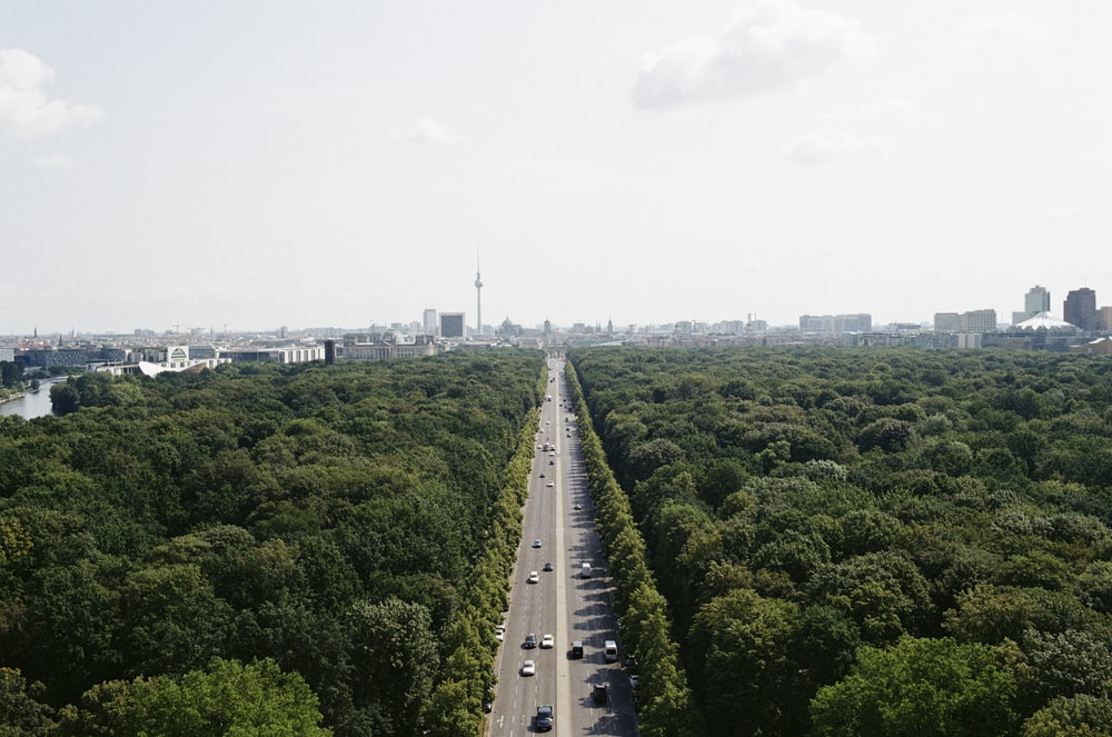 photo of asphalt road surrounded by trees