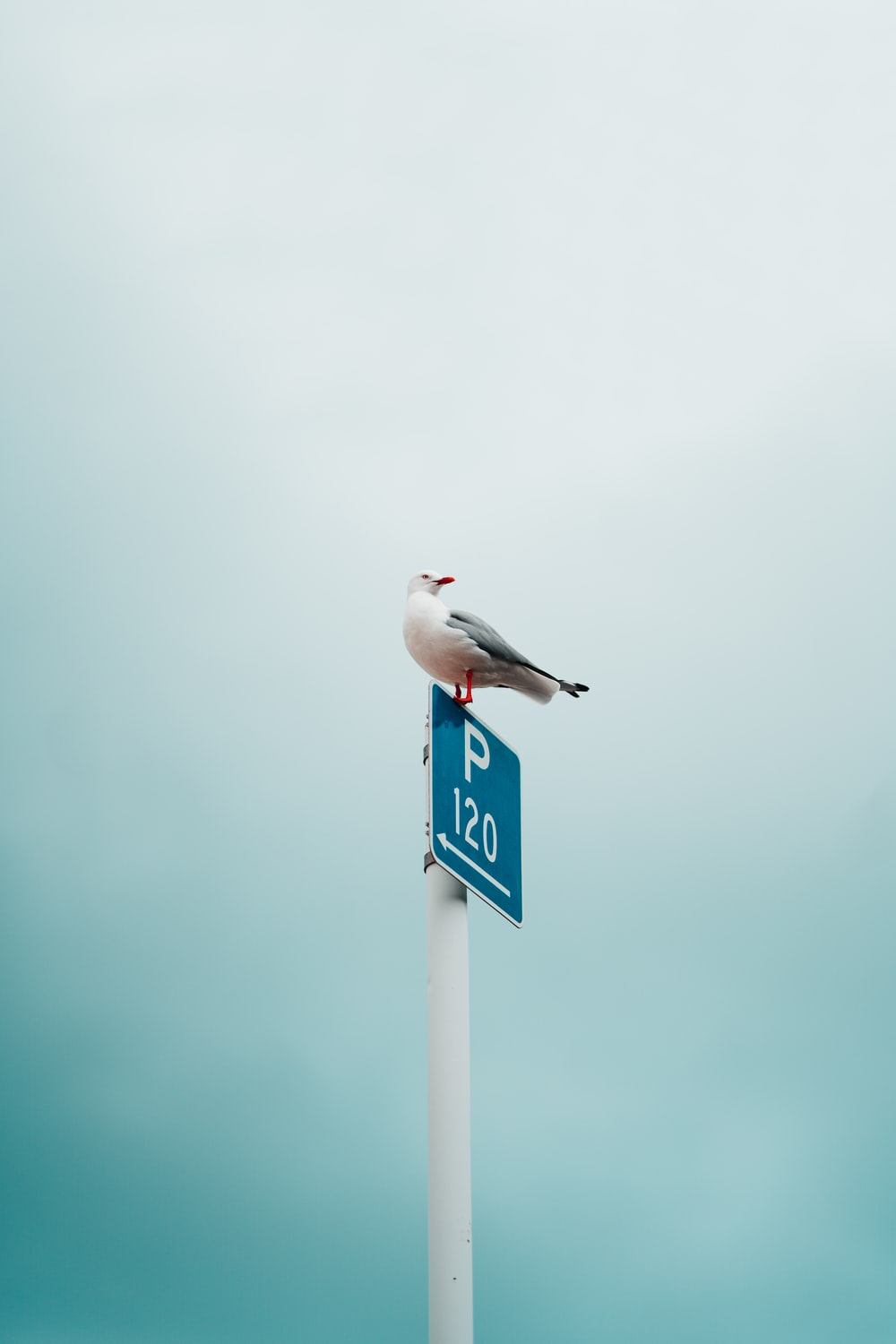 bird on blue and white metal road sign
