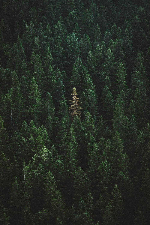 green treers