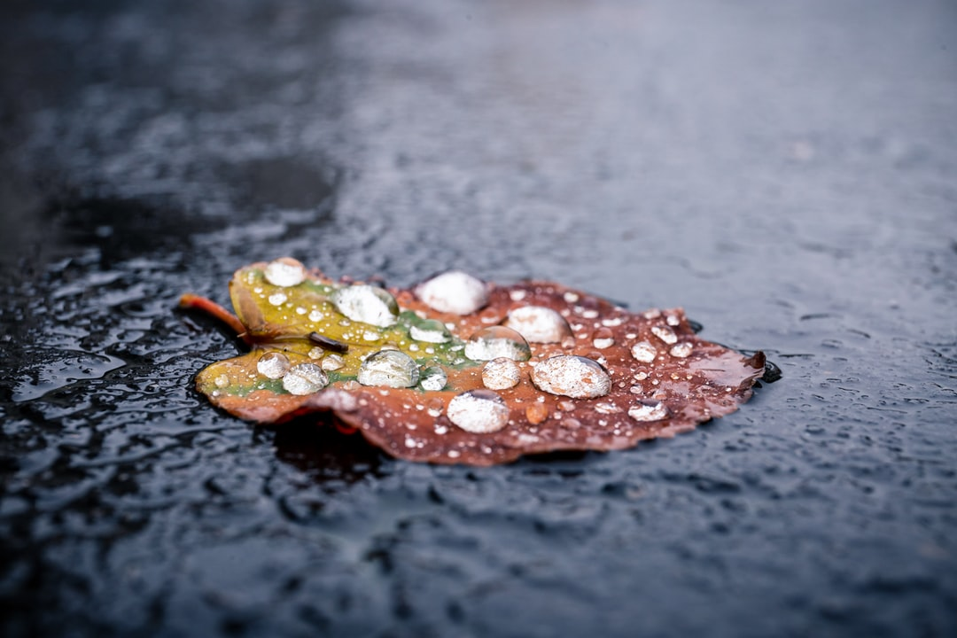 autumn is around the corner