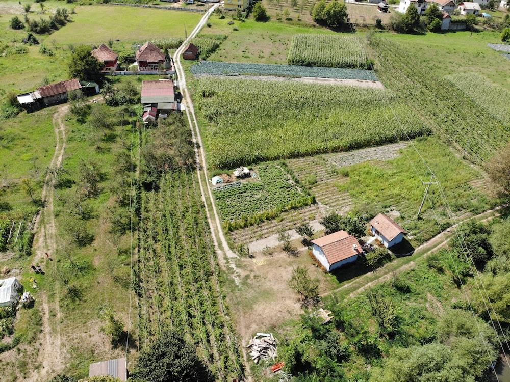 houses beside field