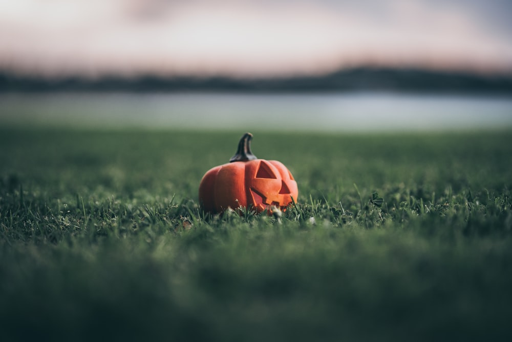 pumpkin on grass
