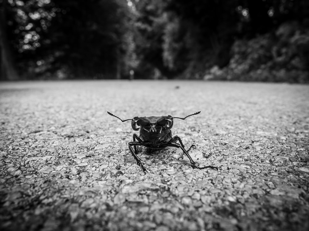 grayscale photography of insect