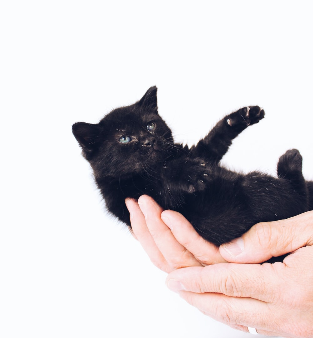 person holding black kitten