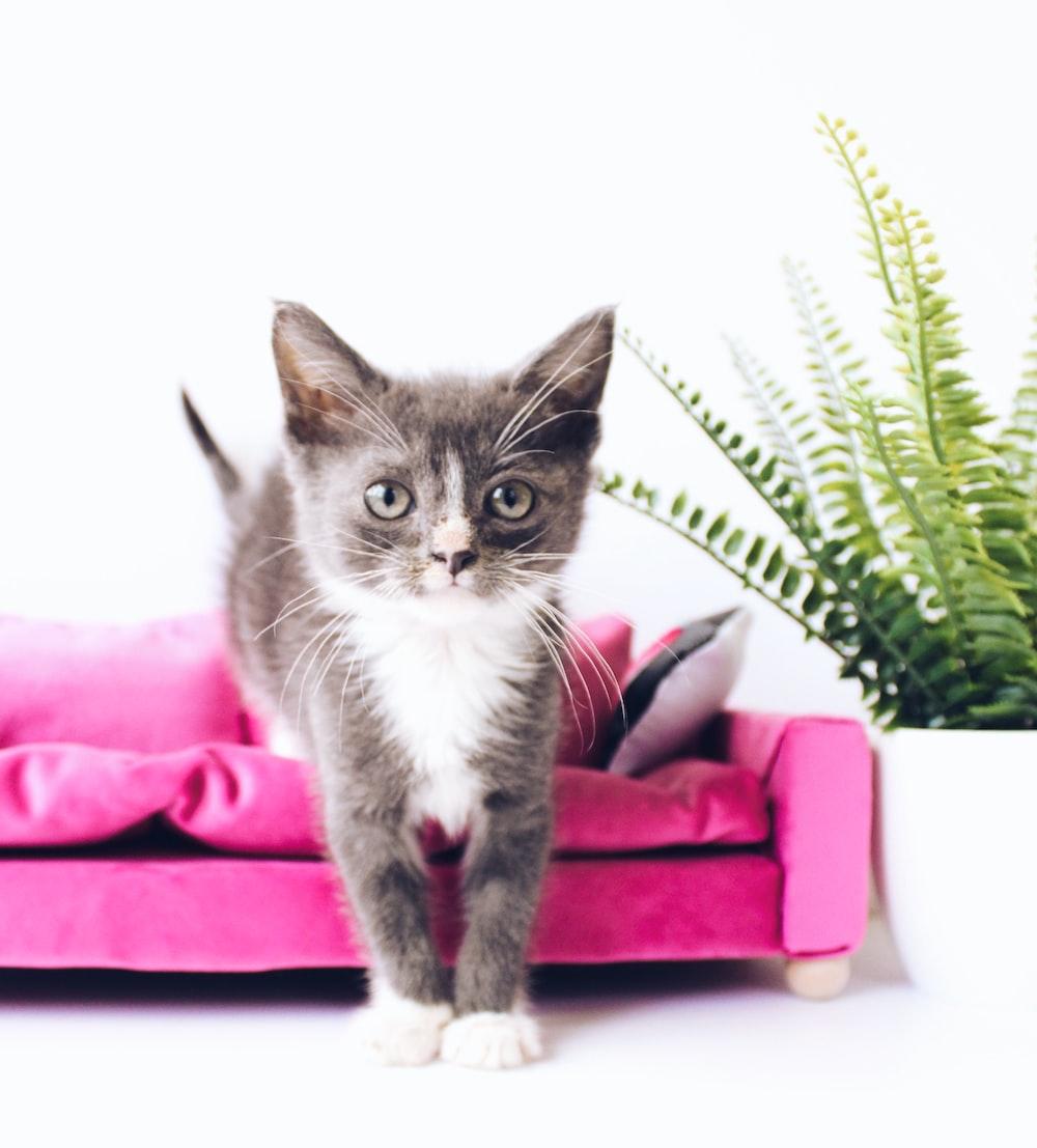 tuxedo kitten beside fern plant