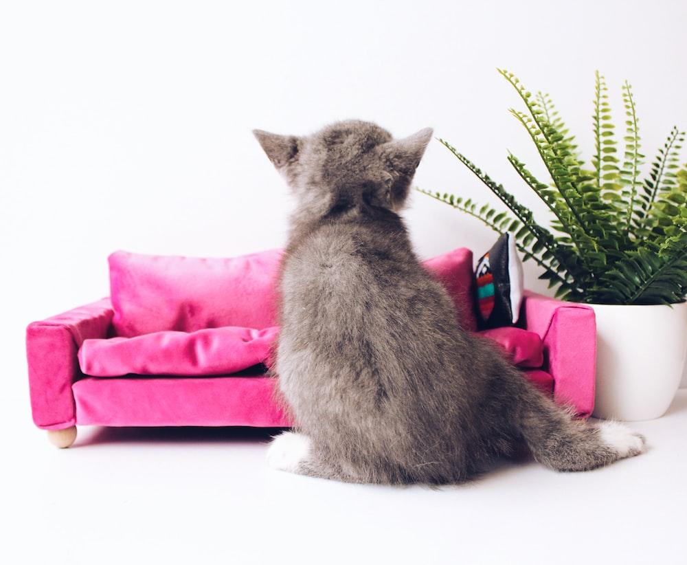 kitten near plant
