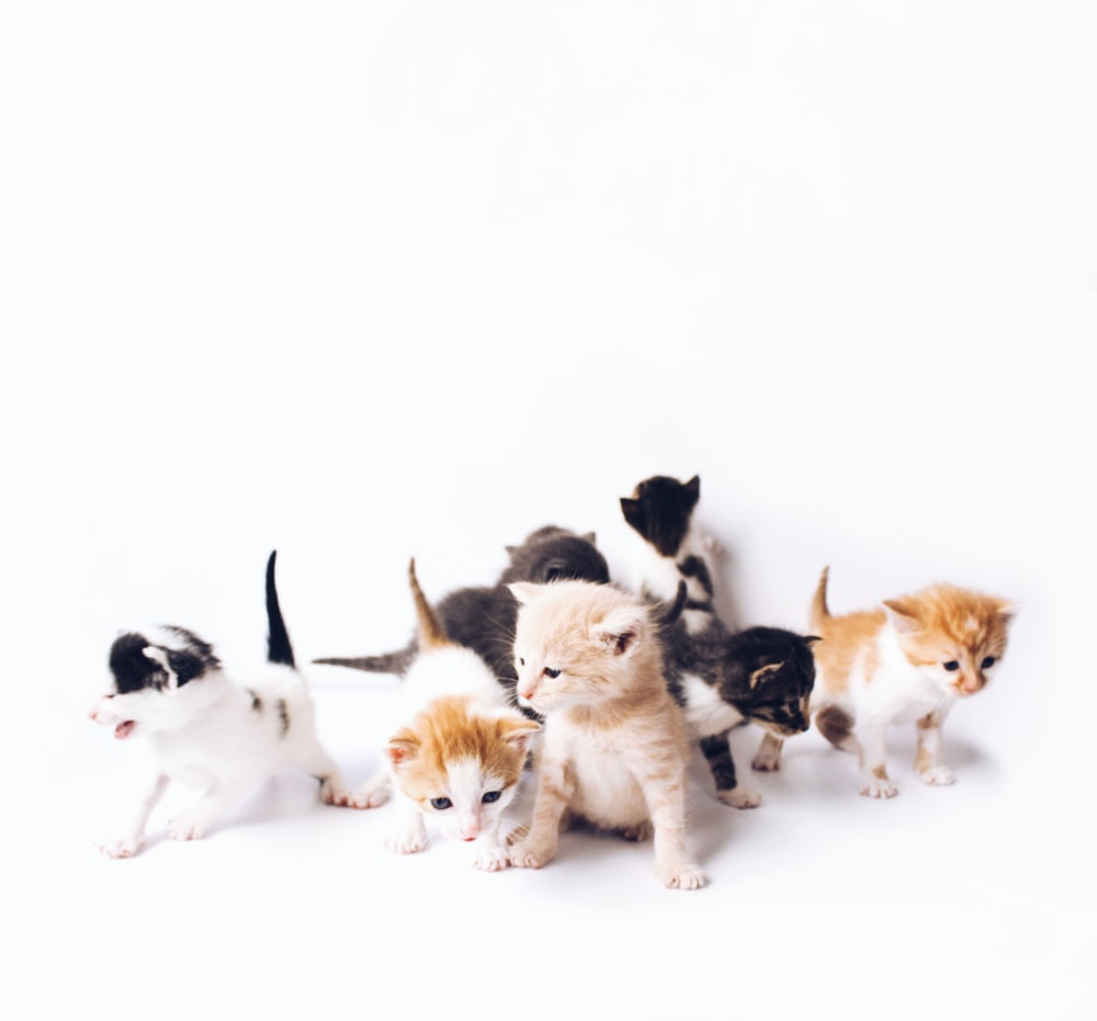 assorted-color kittens