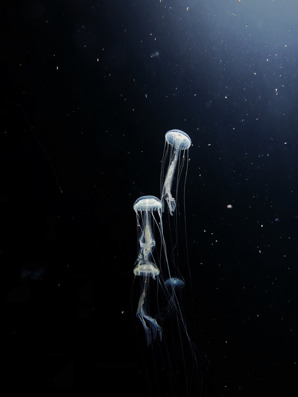 white jellyfish