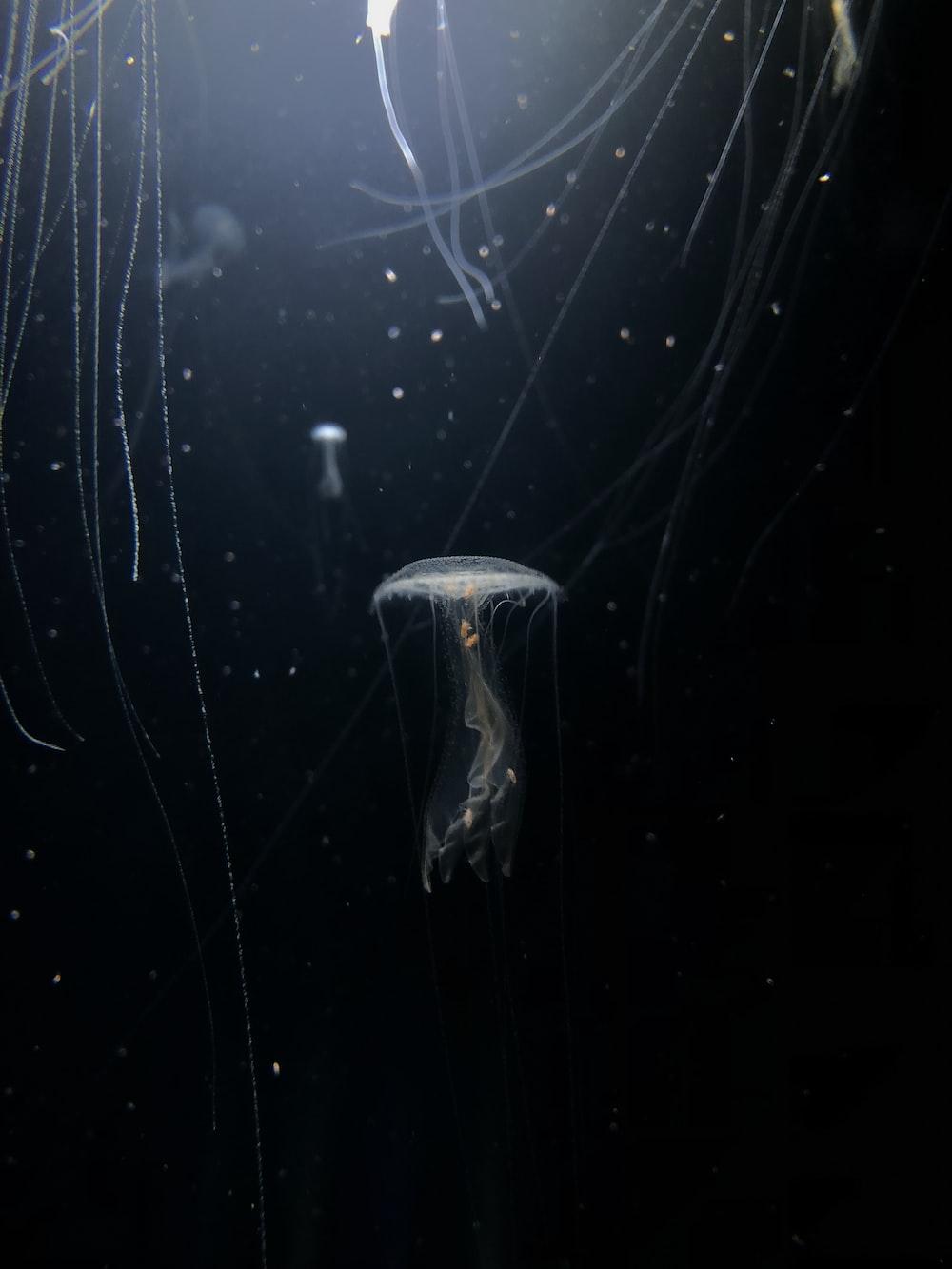 white jellyfish