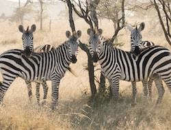 Serengeti Nationalpark