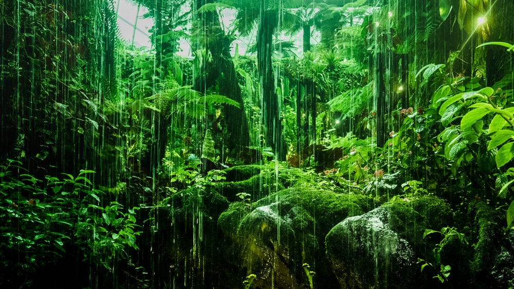 100 Stunning Rainforest Pictures Hd Download Free Images On Unsplash
