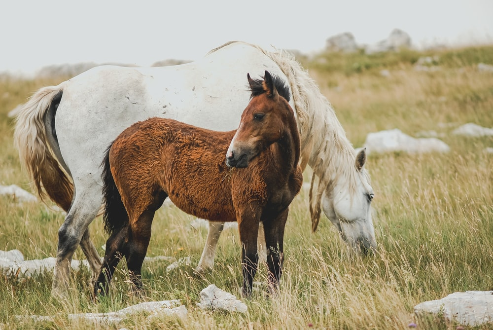 photo of brown and white coated horses