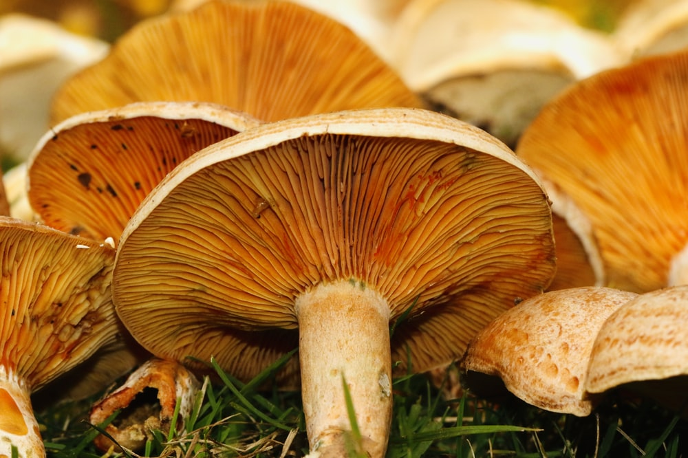 white and brown mushrooms close-up photography