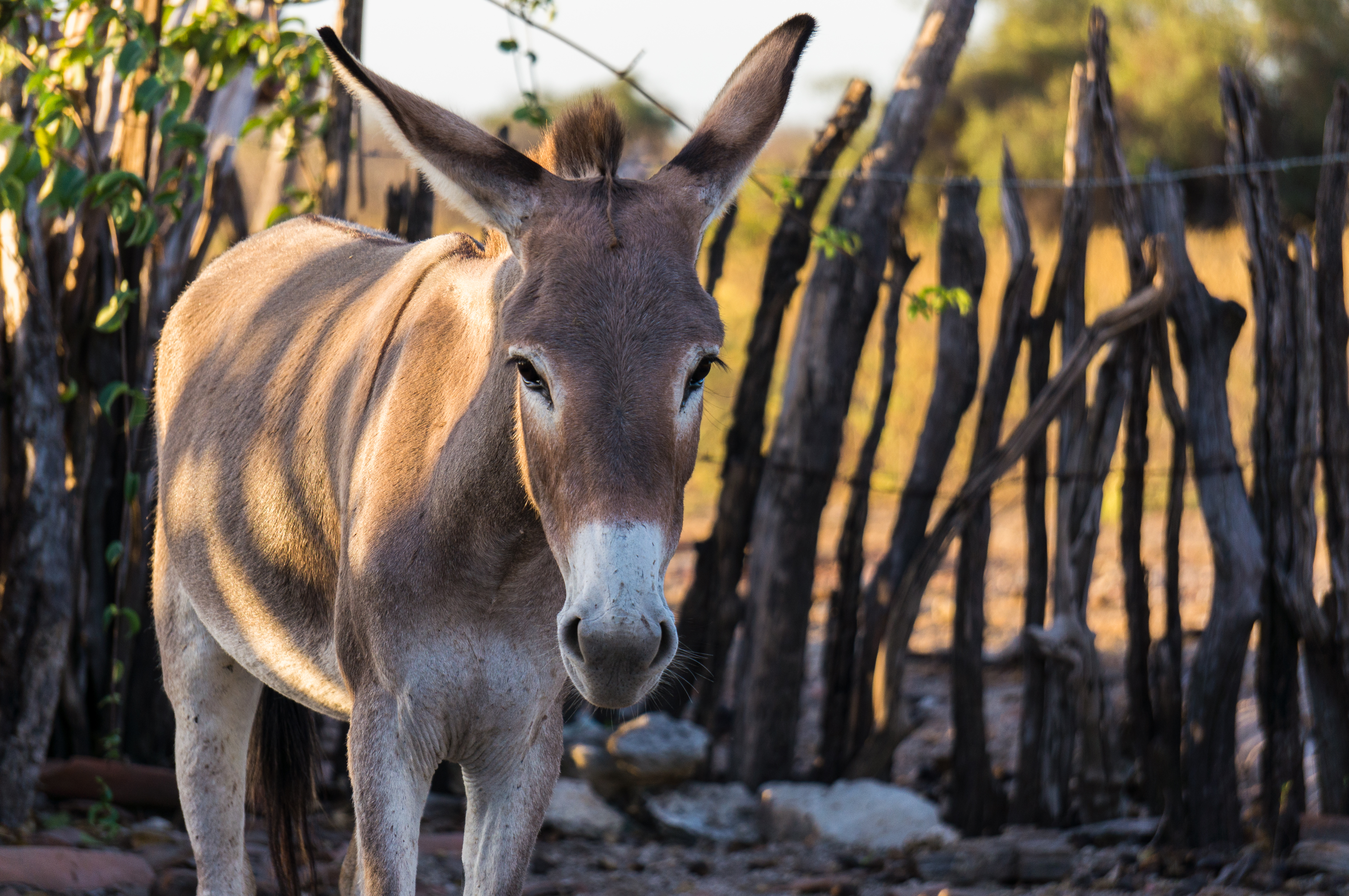 A donkey posing for a photo