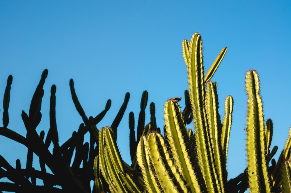 green cactus plant close-up photography