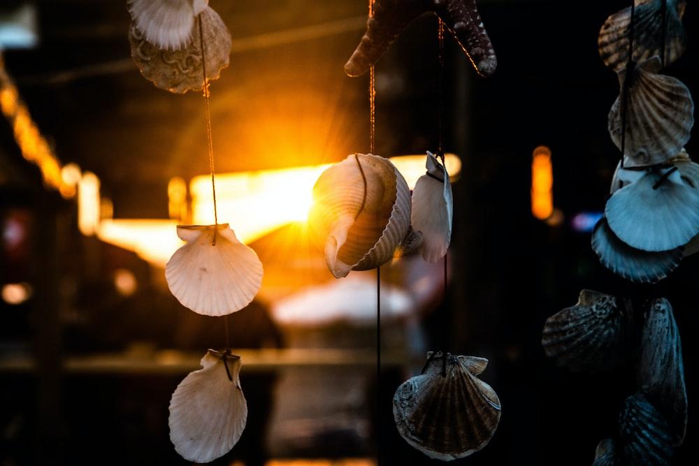 hanged white-and-brown seashells