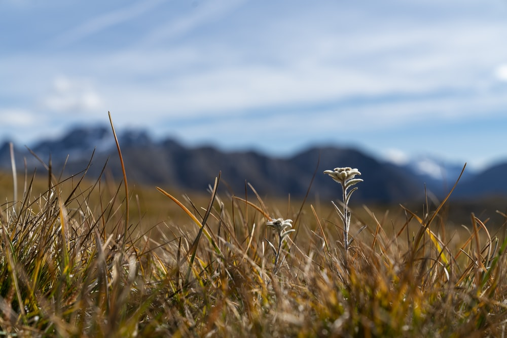 selective focus photography of grass field during daytime