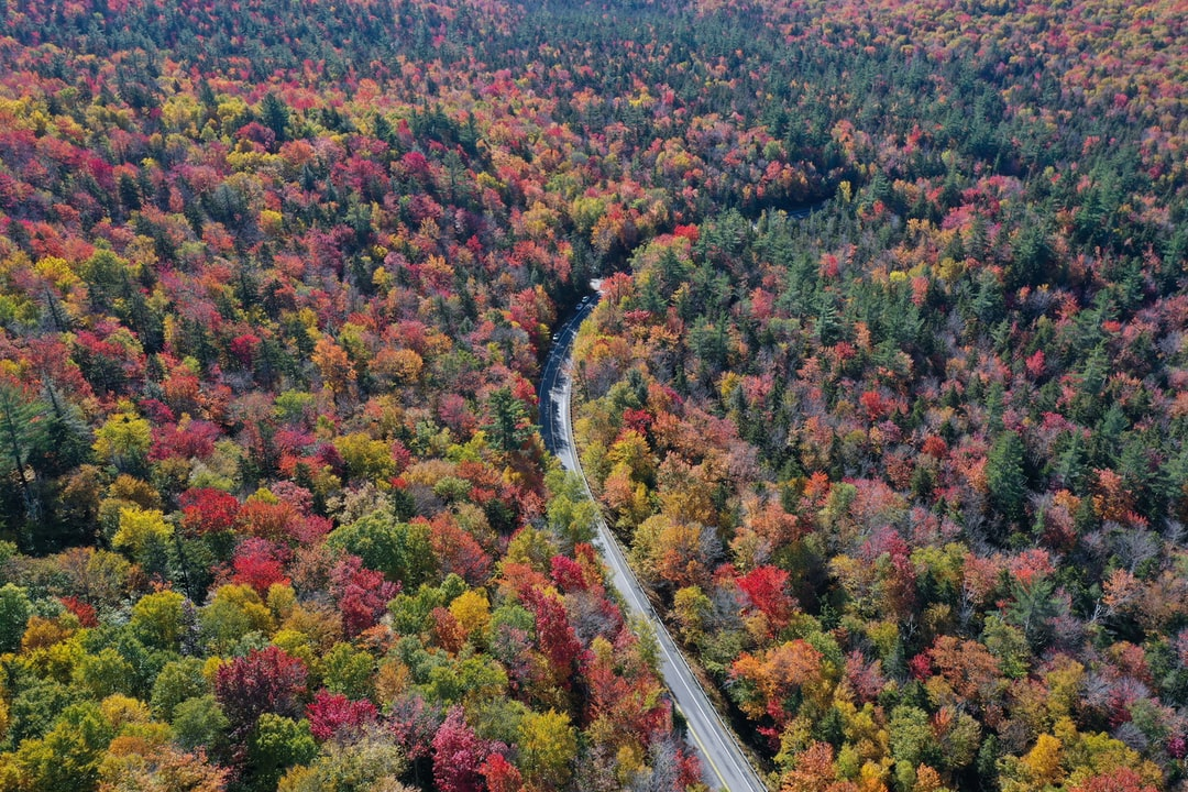 Fall Foliage, Kancamangus Highway, NH