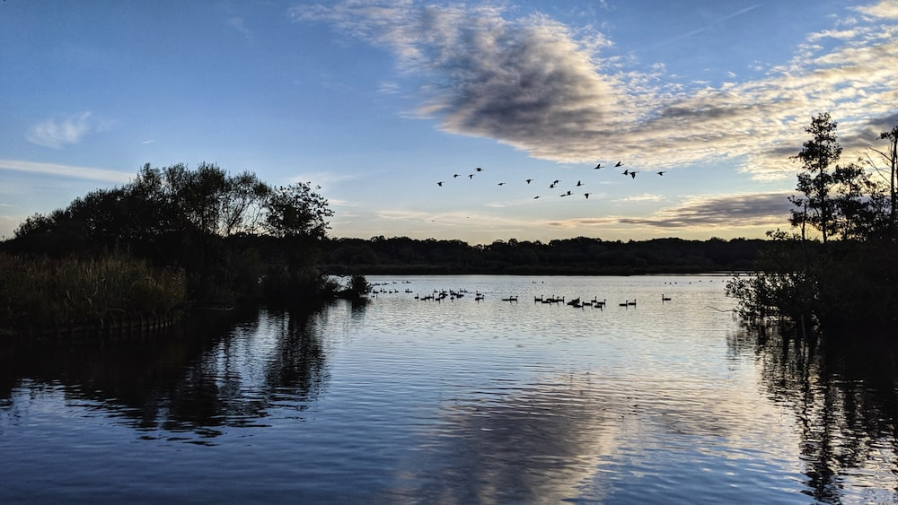birds flying above body of water near trees during day