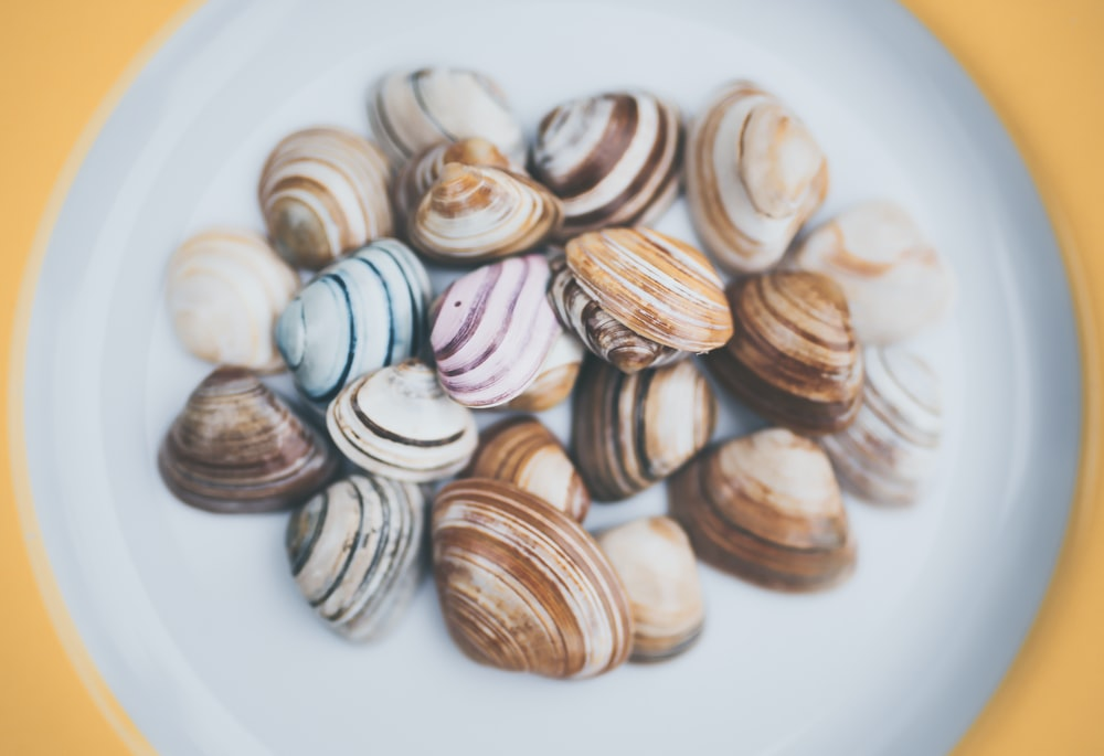 assorted-color shell lot