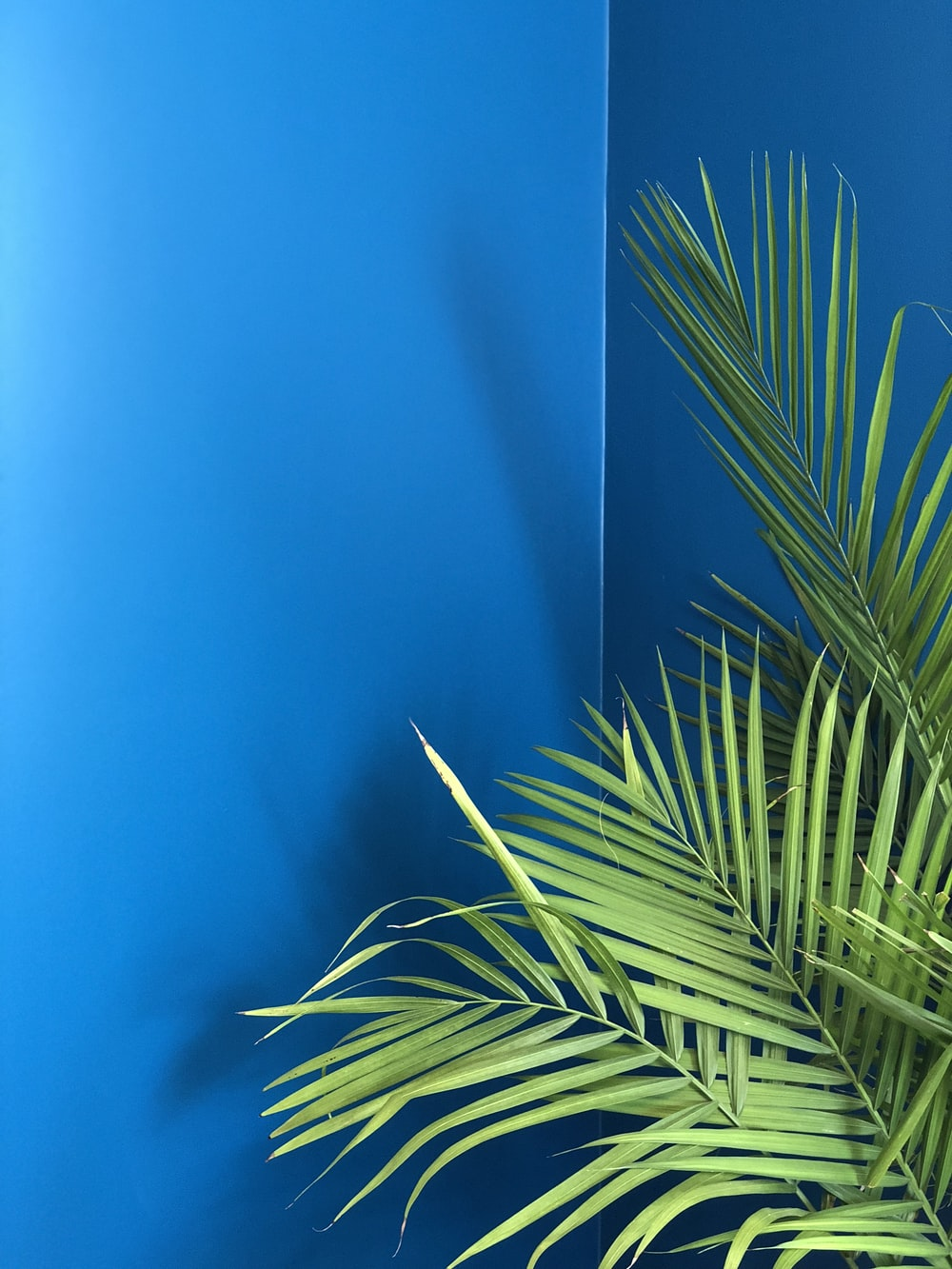 green palm plant near blue wall