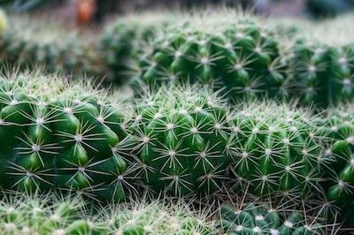 green cactus plant close-up photography rio de janeiro zoom background