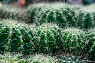 green cactus plant close-up photography rio de janeiro teams background