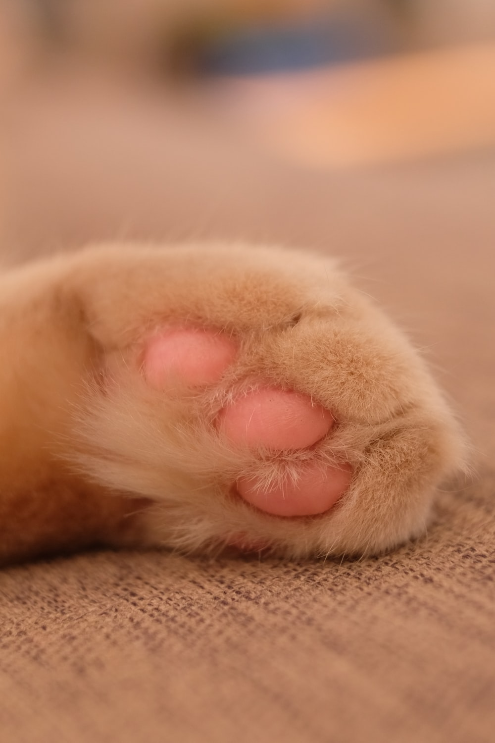 brown and pink paw