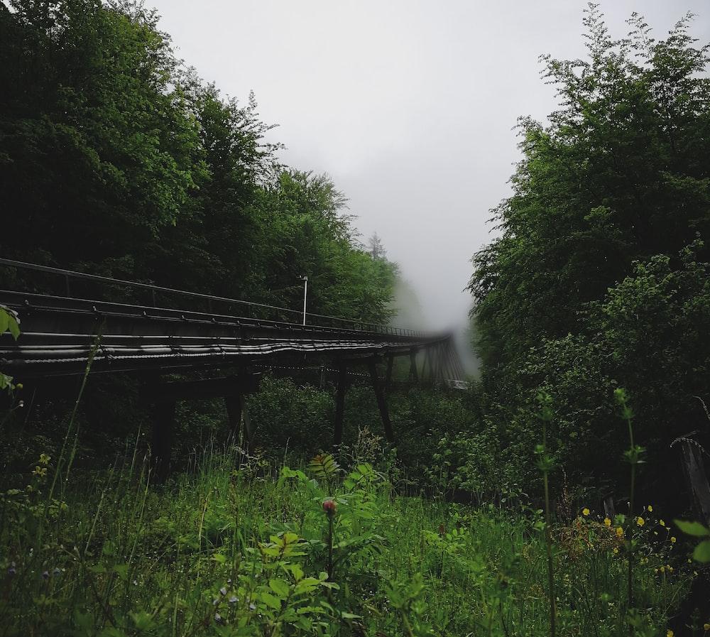 gray wooden bridge near trees at daytime