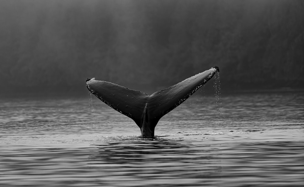 whale's tale on water