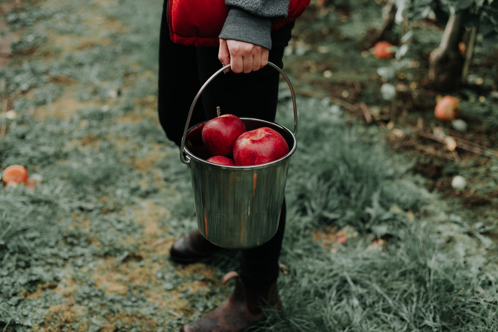person holding bucket of apple fruits