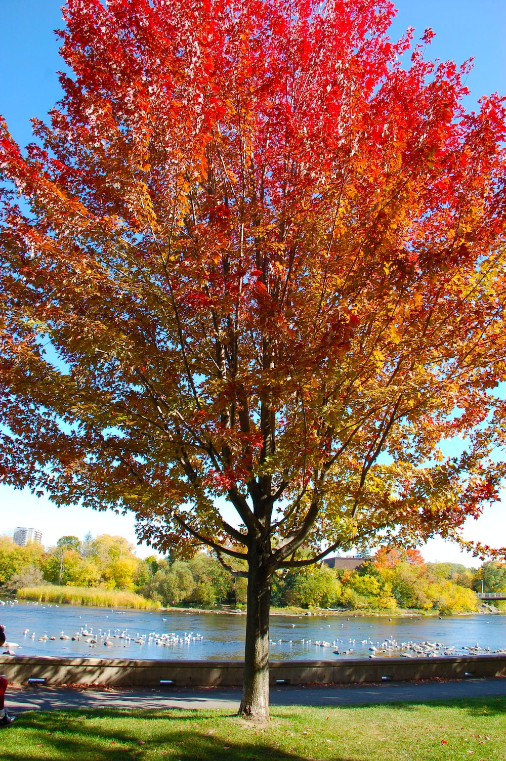 red and brown leafed tree
