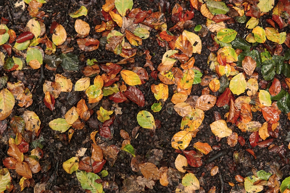 brown and red leaves on ground