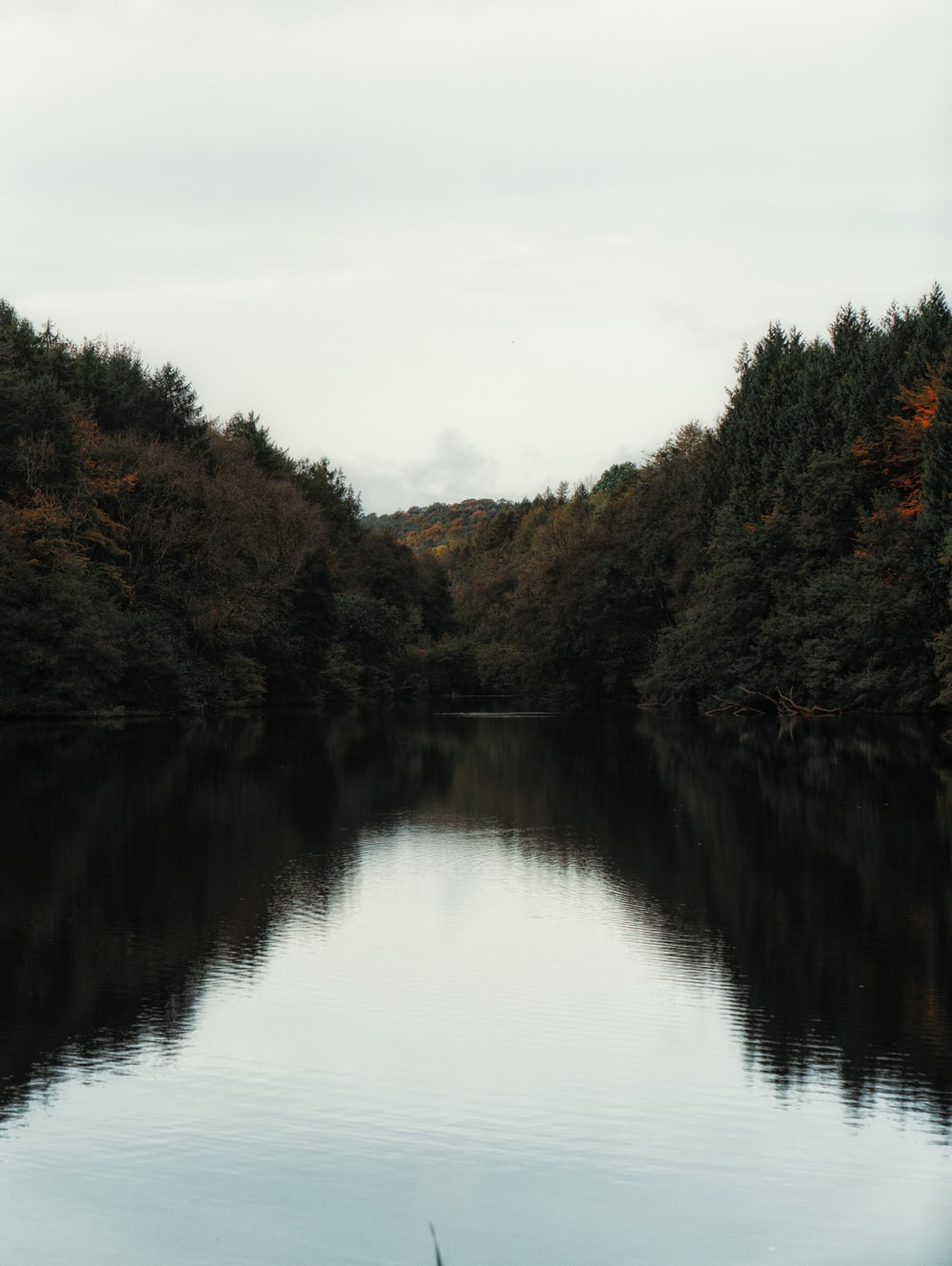 body of water surrounded with trees
