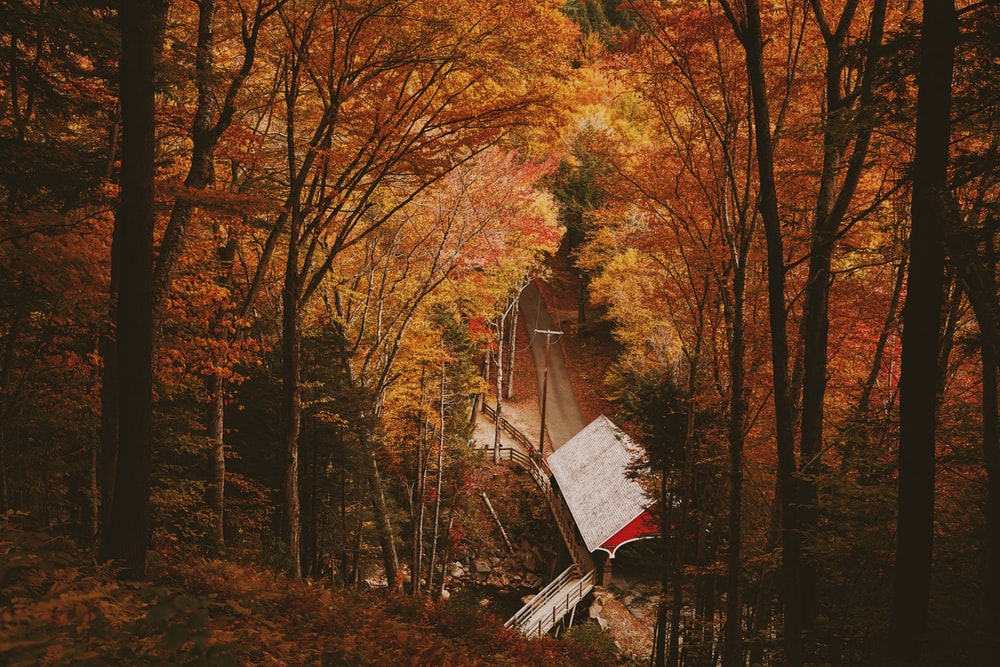 white and red wooden house surround by trees