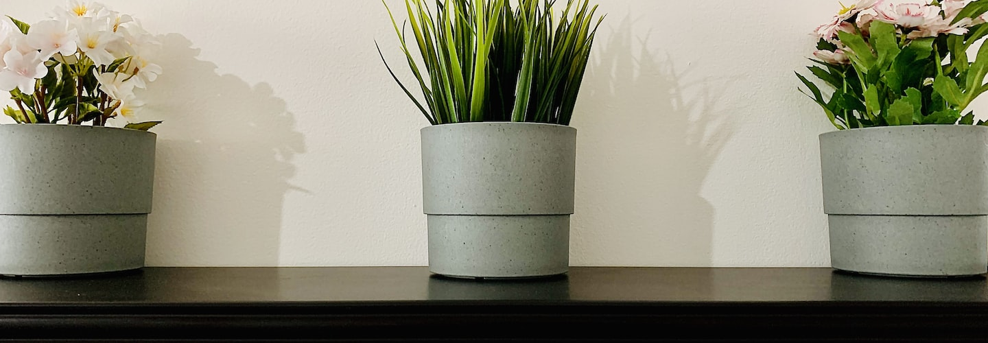 Create Indoor Garden with Forced Spring Flowering Branches