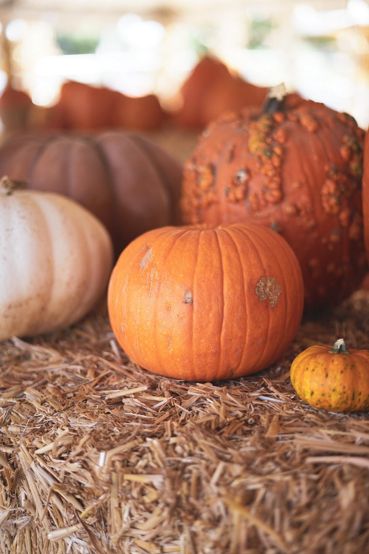 assorted pumpkins on hay