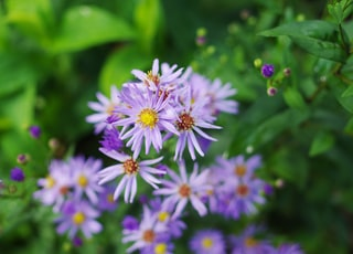 purple-and-white petaled flowers