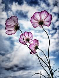 Memory Flower imagination stories