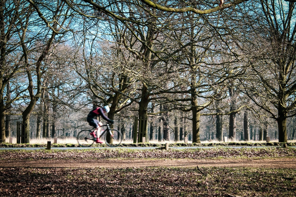 person riding bike beside trees