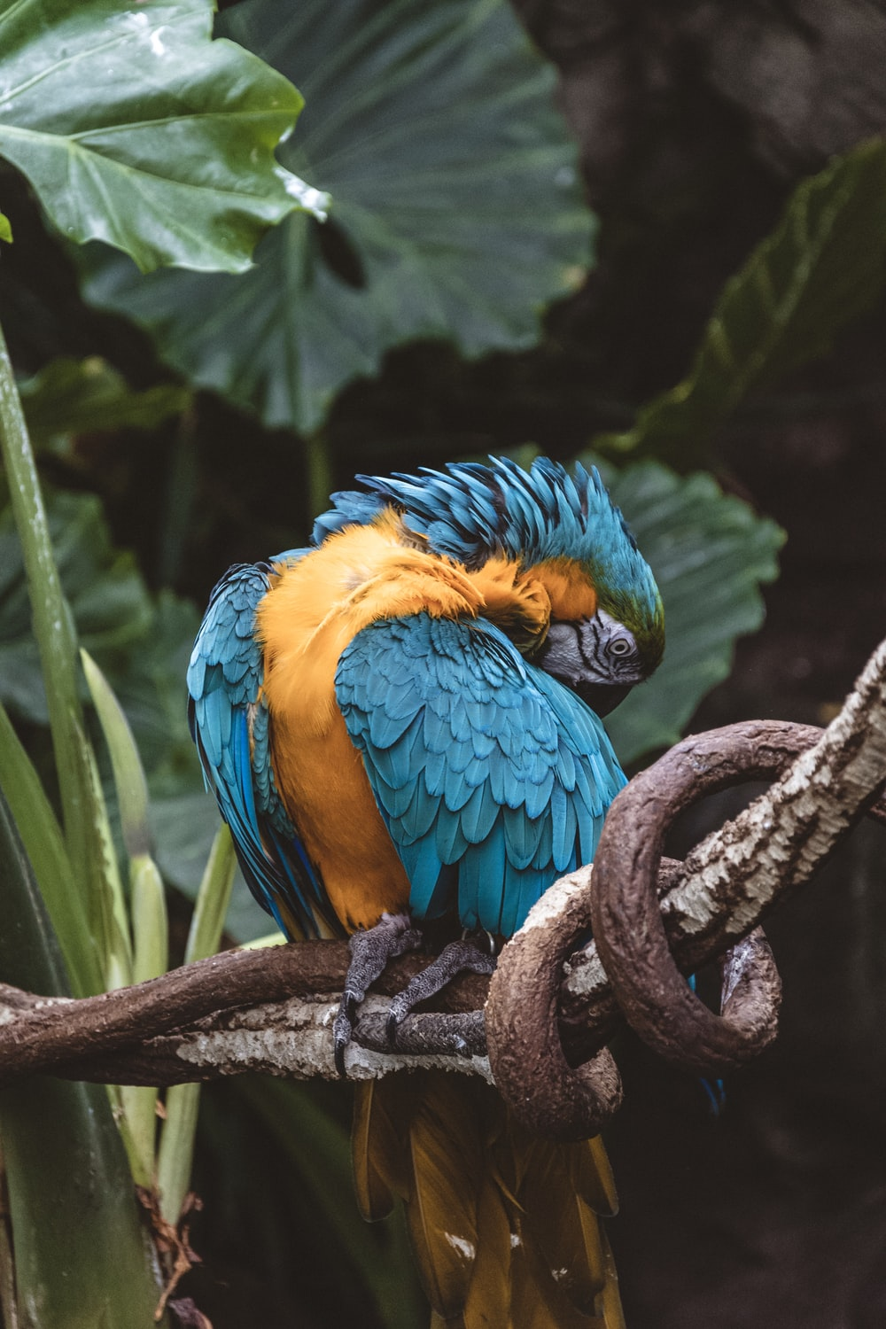 blue and yellow parrot bird