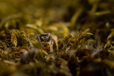 macro photography of black spider on grass
