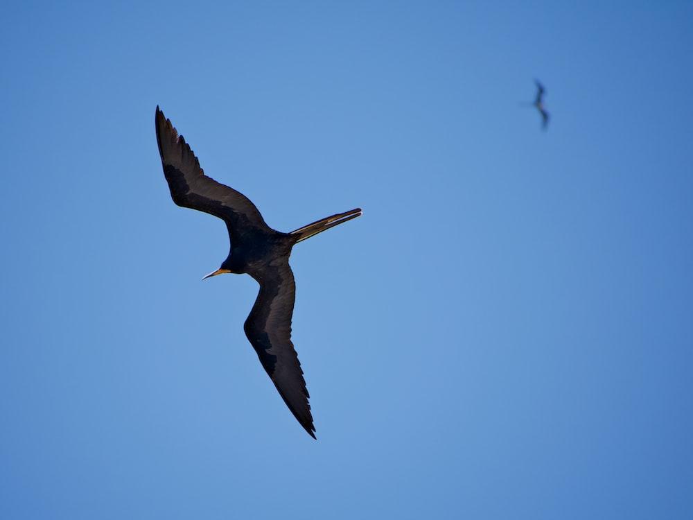 2 black birds flying photo