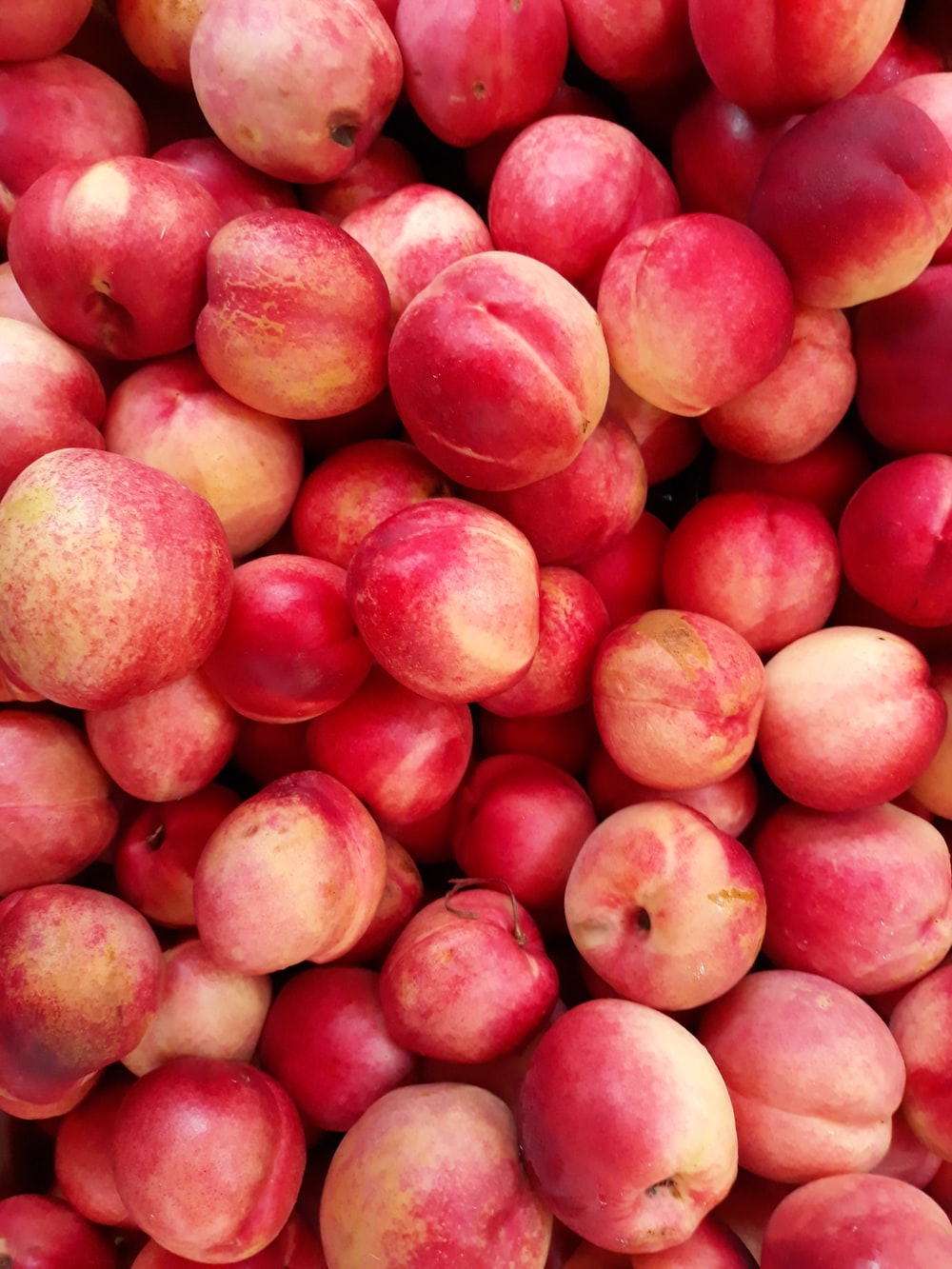 shallow focus photo of red apple fruits