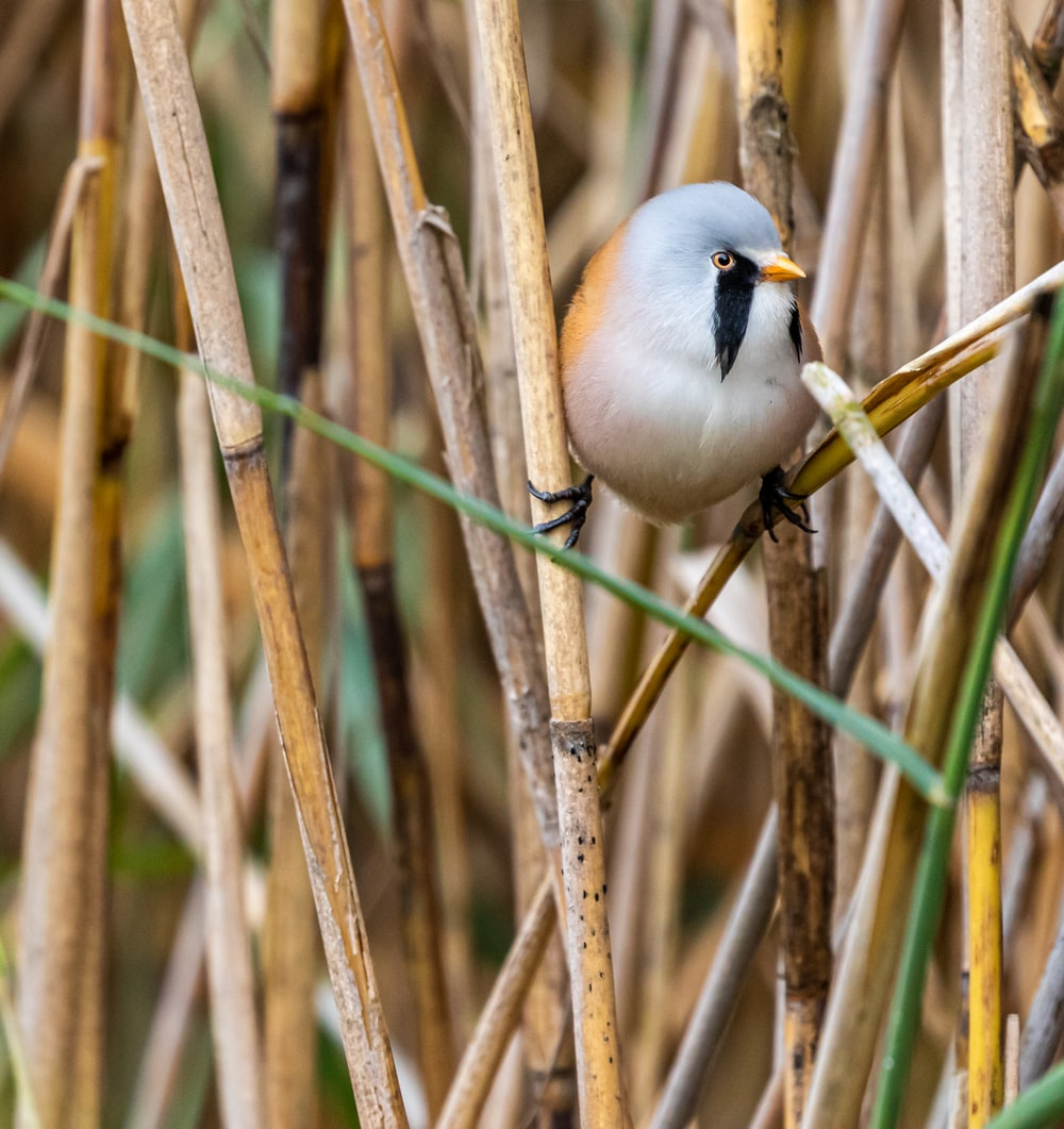 white and brown bird
