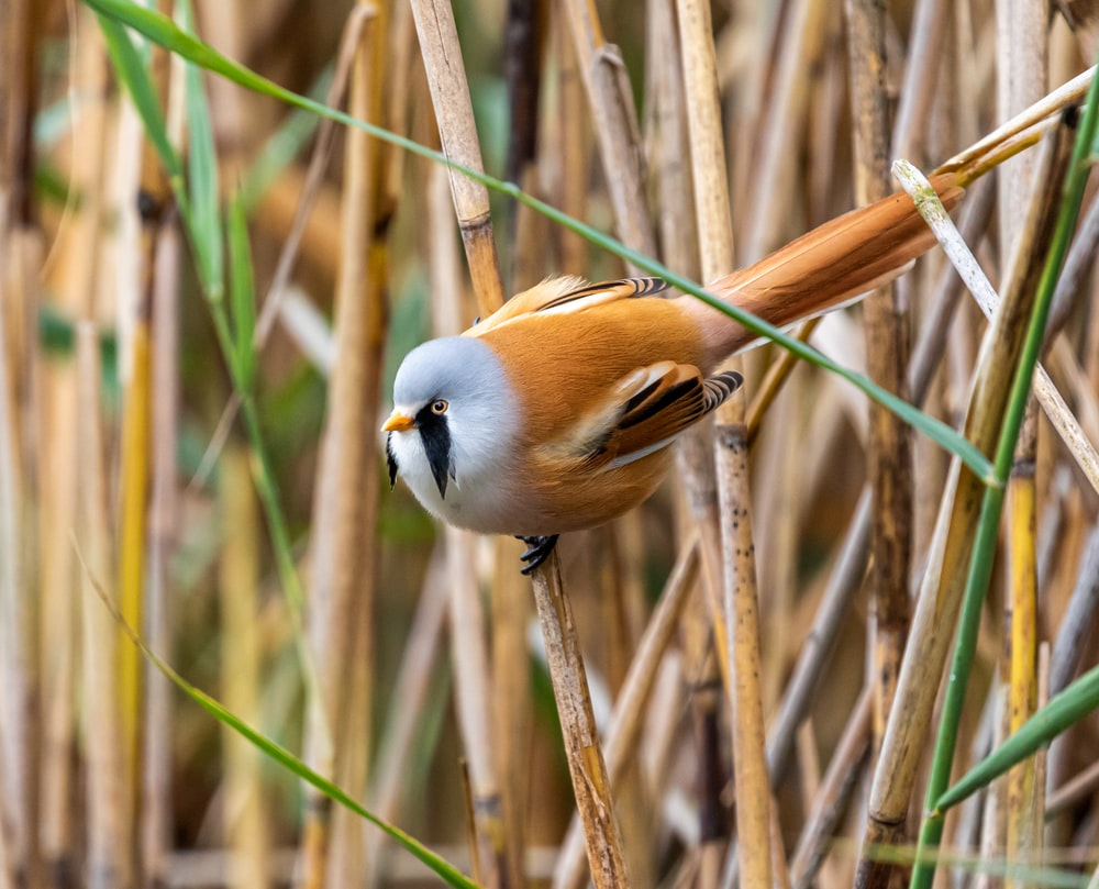 white and brown bird on grass field