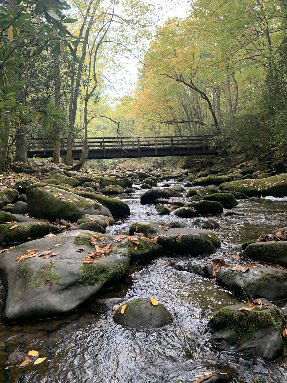 body of water between trees near bridge